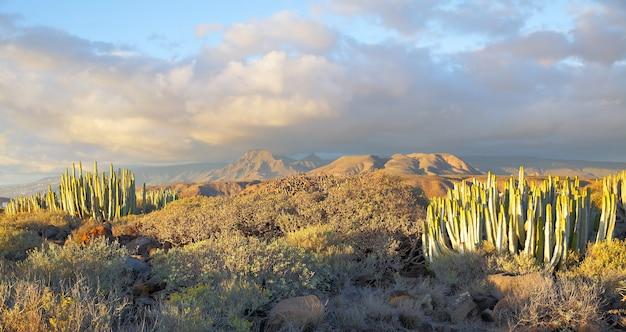 Красивый панорамный вид на пустыню с растениями на закате на тенерифе, канарские острова