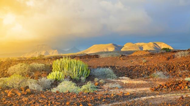 Прекрасный панорамный вид на тенерифе, канарские острова