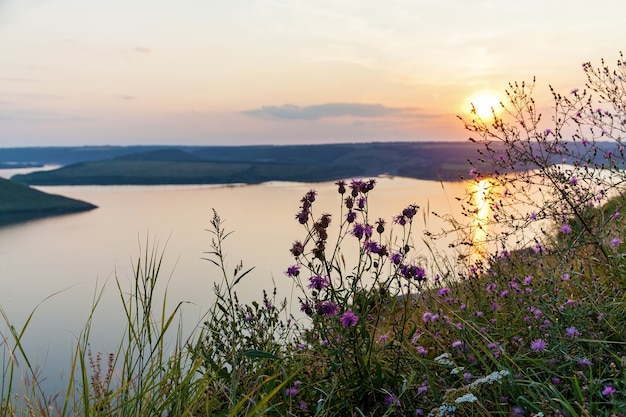 A beautiful panoramic view of a pink sunset over a big lake on a summer day. there are pink wildflowers in front of this nature picture.