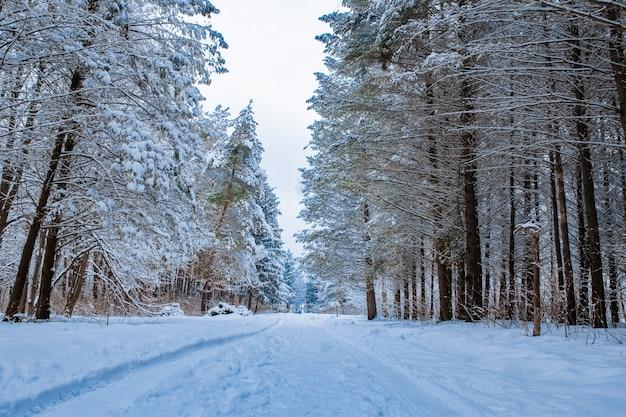 公園の冬の降雪の美しい公園の森