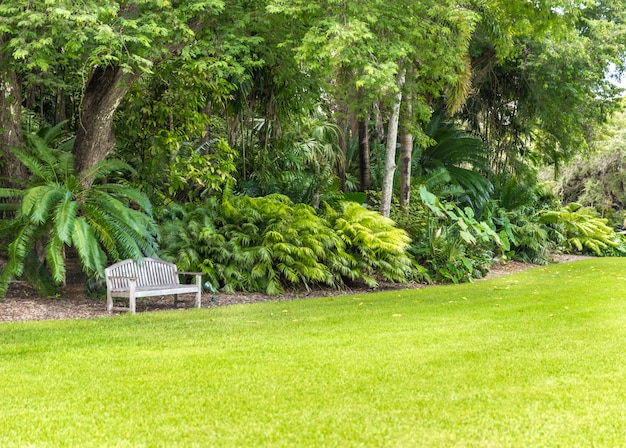 Beautiful park with tropical nature and palms