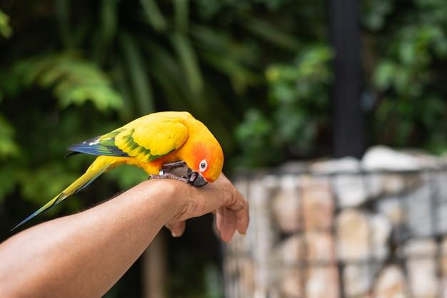Красивая птица попугай на руке человека
