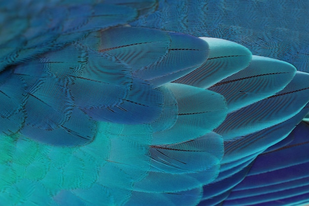 Beautiful parrot feathers background , nature background and texture