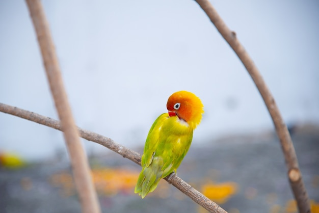 Красивый попугай на ветке в природе