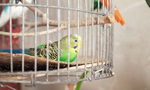 Beautiful parrot in a wire cage.