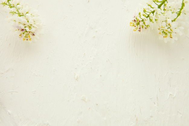 Beautiful pastel floral border beautiful blurred background. shallow depth of field . white background with flowers