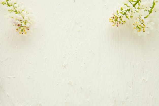 美しいパステルフローラルボーダー美しいぼやけた背景。浅い被写界深度。花と白い背景