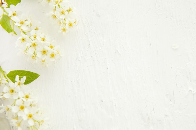 Beautiful pastel floral border with bird cherry beautiful blurred background. shallow depth of field . white mock up background with flowers