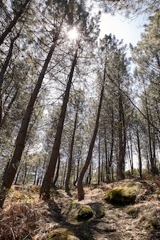 Beautiful path on the side of a mountain among pine trees for trekking