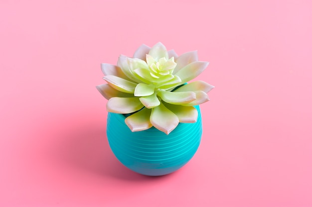 Beautiful pattern of green succulent isolated on pink background