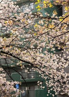 일본의 아름다운 복숭아 나무 꽃