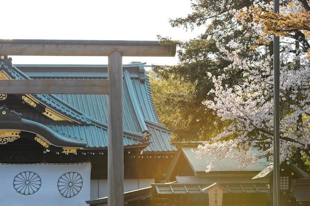 대낮에 도쿄의 아름다운 복숭아 나무 꽃