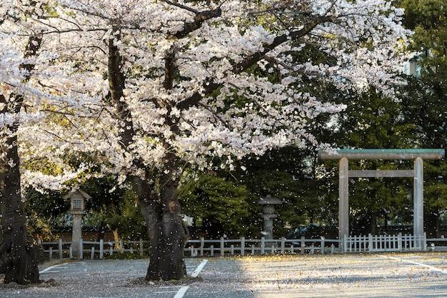 Красивое цветущее персиковое дерево в токио при дневном свете