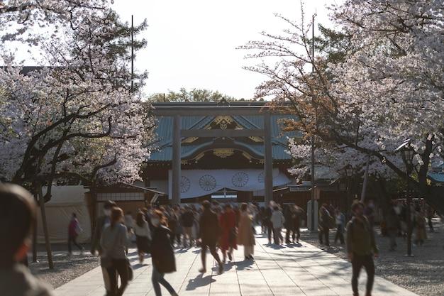 Красивое цветущее персиковое дерево в токио