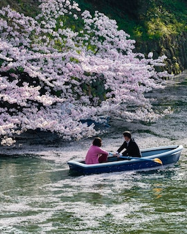 Beautiful peach tree blossom in japan