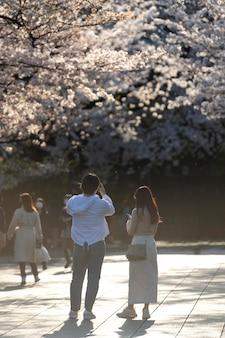 Bellissimo albero di pesco in fiore a tokyo alla luce del giorno