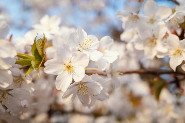 아름다운 복숭아 나무 꽃