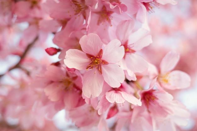 美しい桃の木の花