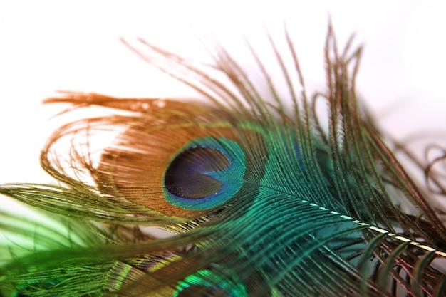 Красивое павлинье перо на белом фоне с копией пространства