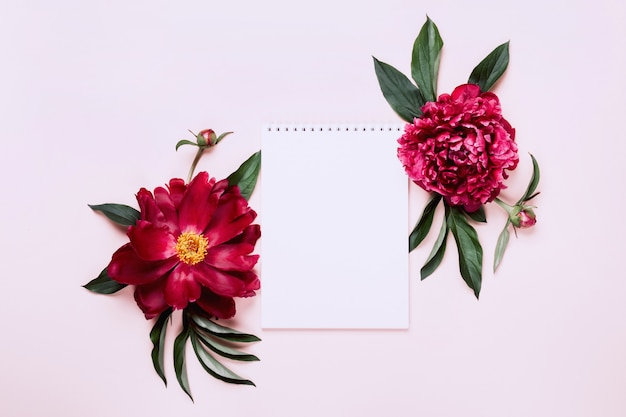 Beautiful peonies and notebook. white floral background, copy space.