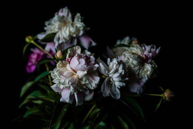 Красивые пионы в темной комнате