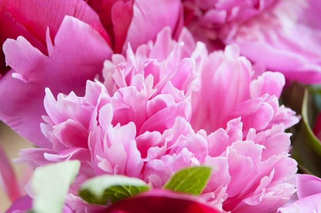 美しい牡丹の花の花束