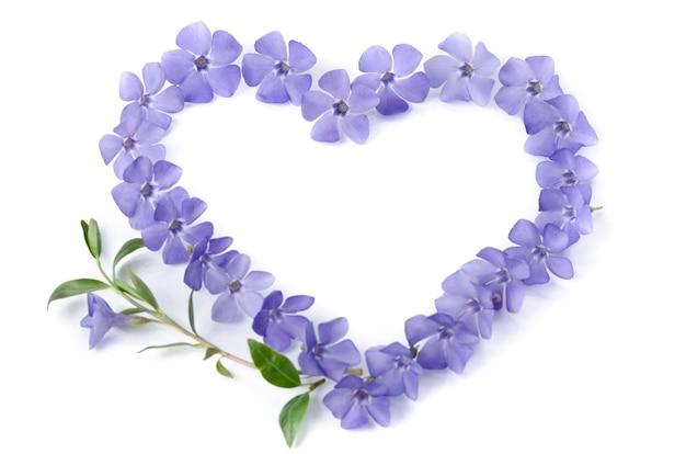 Beautiful periwinkles in shape of heart