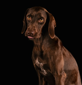 Beautiful pet breed breed with tender look