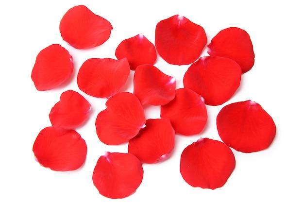 白地に赤いバラの美しい花びら
