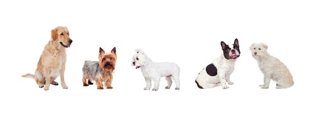 흰색 배경에 고립 된 아름다운 애완 동물