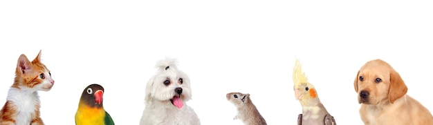 Beautiful pets isolated on a white background