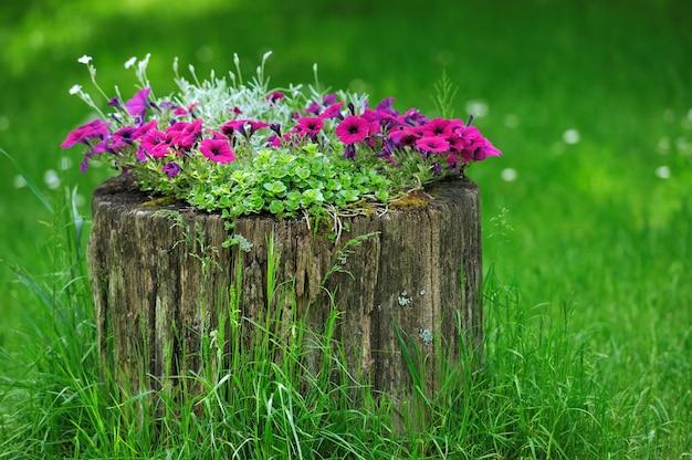 Красивые цветы петунии растут на пне, украшение сада