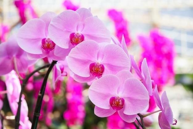 庭に咲く美しい胡蝶蘭の花