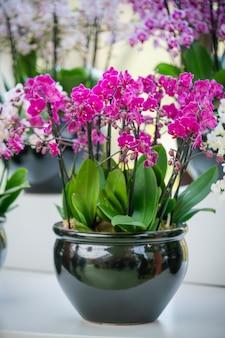 아름 다운 호 접 난초 꽃