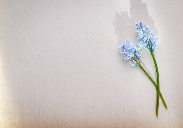 Красивое фото-поздравление с двумя маленькими синими цветочками на зеленых стеблях на фоне белой бумаги с копией пространства