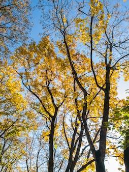明るい青空を背景に、森の中で黄色と赤の葉に覆われた秋の木々の美しい写真