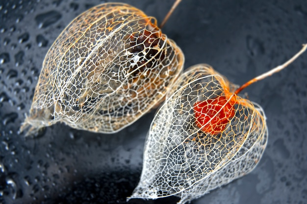 Beautiful physalis / photo for design / lace flower / abstract macro photography.