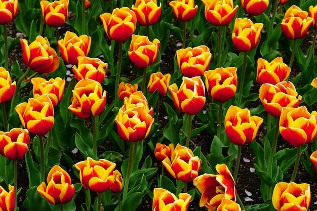 日光の下で庭の色とりどりの花の美しい写真