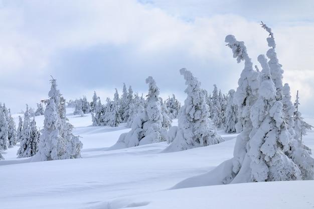 曇りの冬の日の美しい絵のように美しい冬の斜面、山や木々。国の休息の概念。