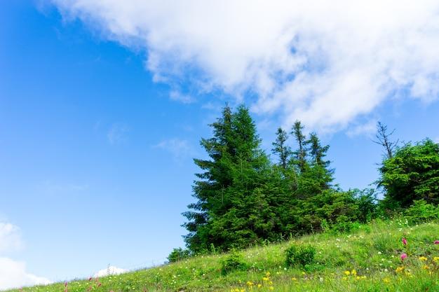Красивые сосны на фоне высоких гор. гора качкар, ризе - турция