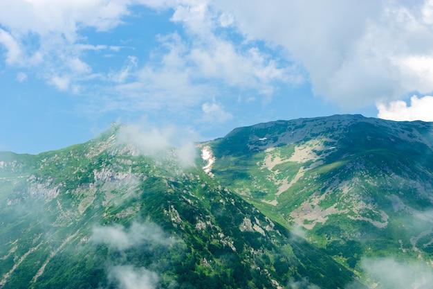 霧の高い山の美しい松の木。 artvin、トルコ