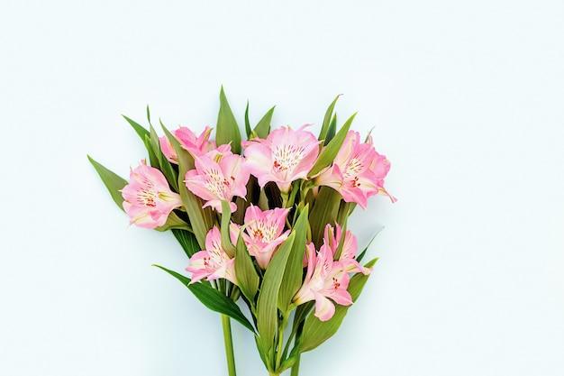 青い背景のデザインのための春と夏の美しいピンクのアルストロメリア。