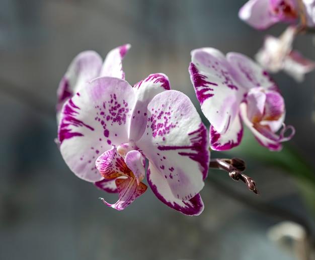 야외에서 아름 다운 분홍색과 흰색 난초