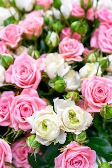 아름다운 분홍색과 흰색 장미. 꽃 축제 자연 배경입니다.