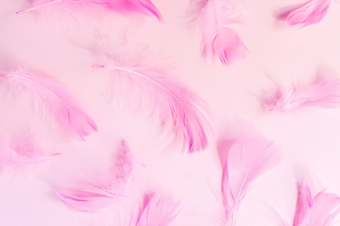 Beautiful pink bird feathers on pink pastel background. Flat lay with copy space.