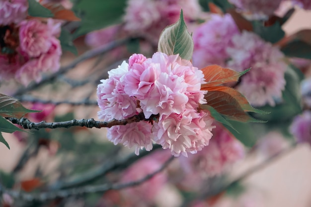 봄날의 아름다운 분홍색 꽃