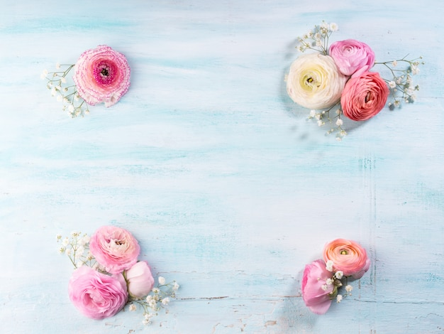 Beautiful pink buttercup frame on turquiose wooden background.