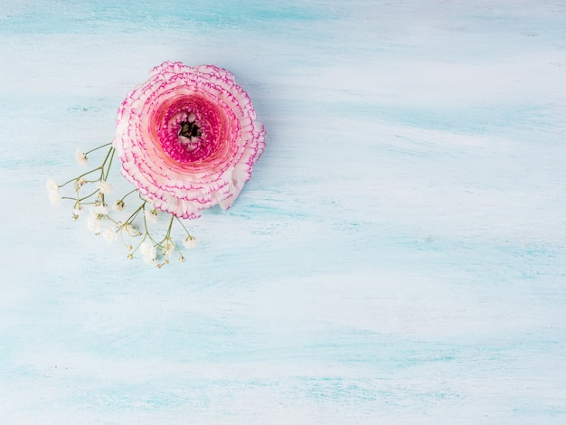 Beautiful pink buttercup frame on turquoise wooden. woman mother's day wedding. holiday elegant bunch of flowers.