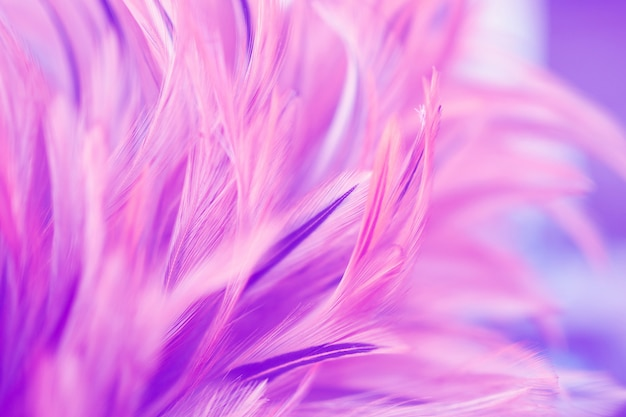 Beautiful pink chickens feather texture for background. blur styls and soft color