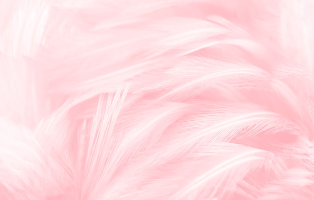 Beautiful pink feathers texture background.